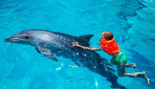 Dolphin Aid