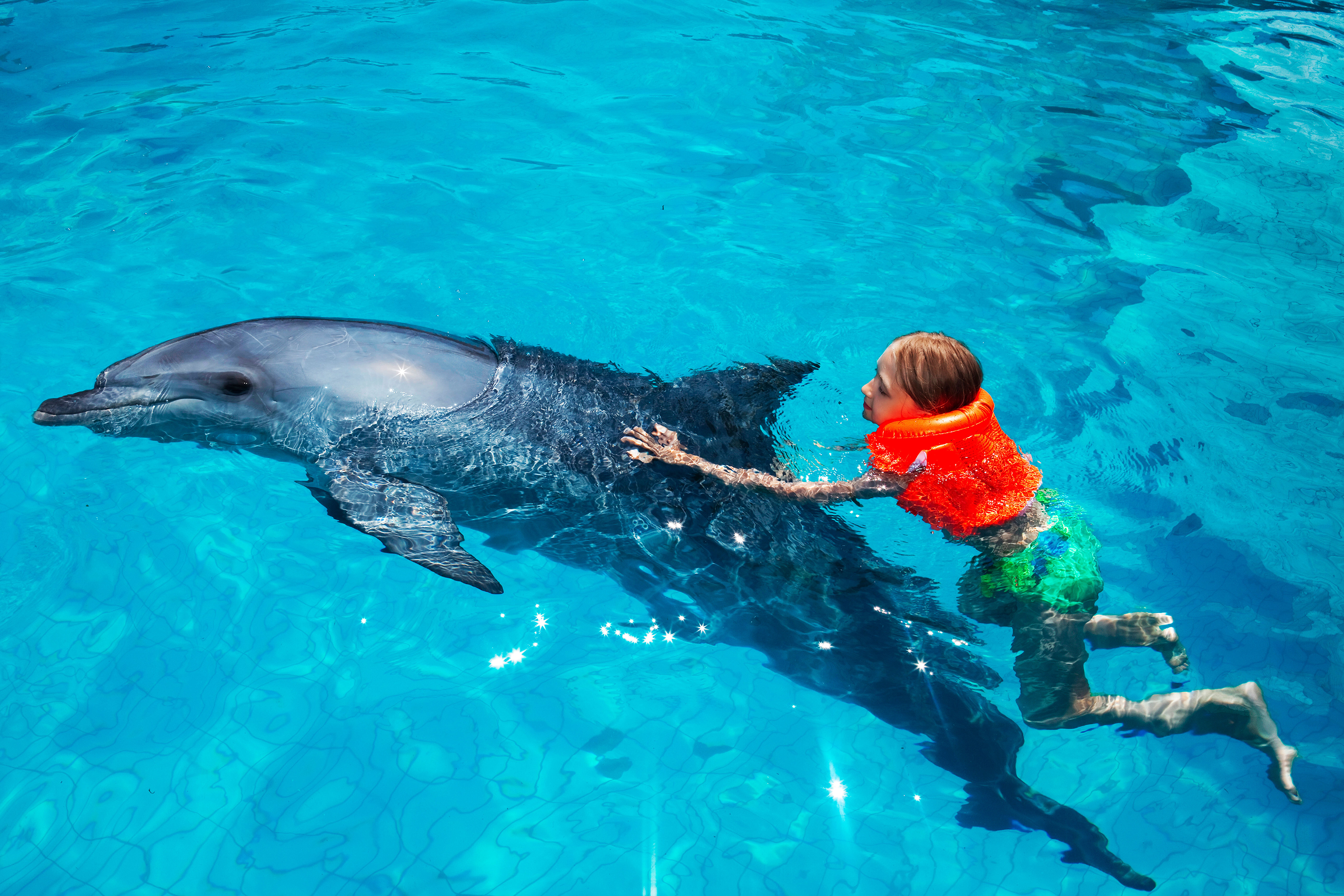 Little Girl and the Dolphin in Swimming Pool | P3 digital ...